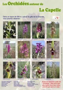 Les orchidées sur le causse